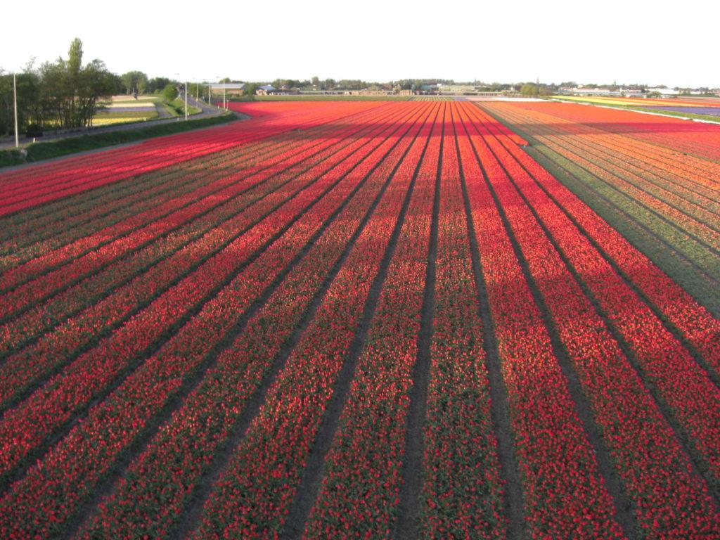 Aerfotos Bollenvelden, Zwartelaan, Lisse, NL, 2009-04-22